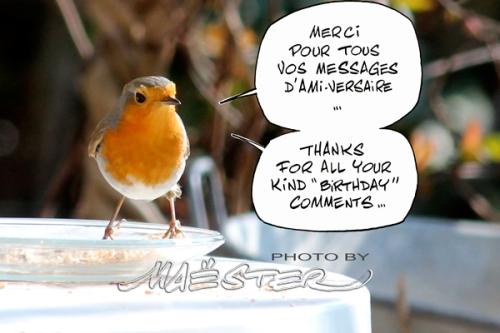 Rouge-Gorge_9762